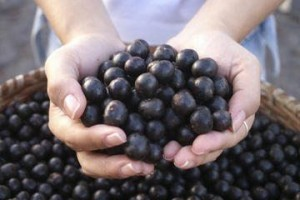 jagody acai owoce 300x200 Acai Berries   opiniones sobre el suplemento natural para Weight Loss
